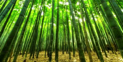 inversion verde