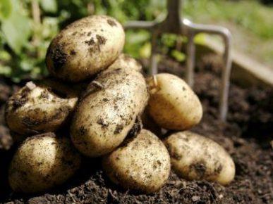 patatas 3
